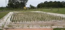 Centra Park Wetlands