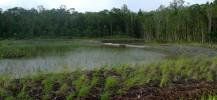 Centra Lake